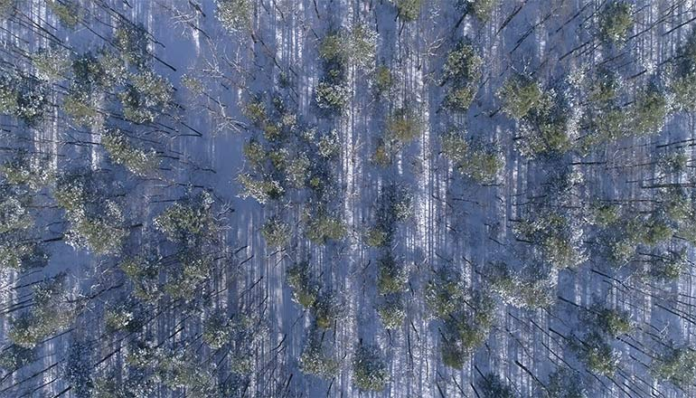 Ujęcia z drona na sprzedaż - Lasy podczas zimy