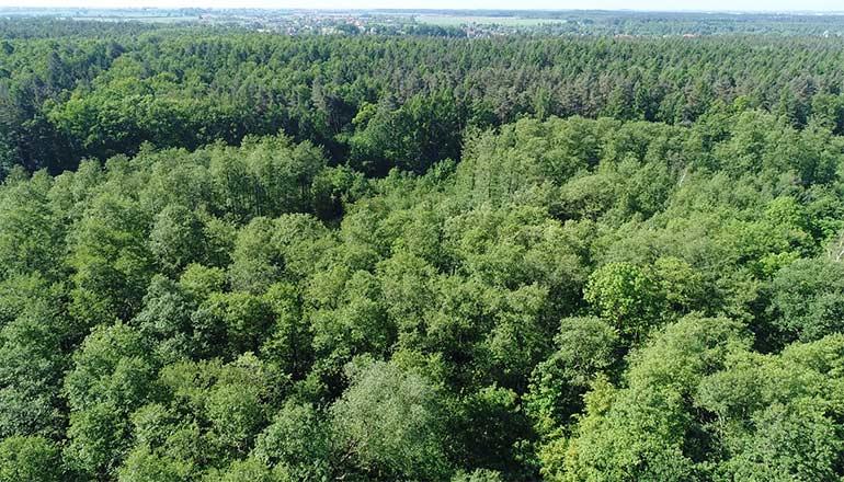 Ujęcia z drona na sprzedaż - Lasy, łąki i pola uprawne